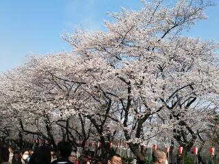 上野のお山は花盛り〓