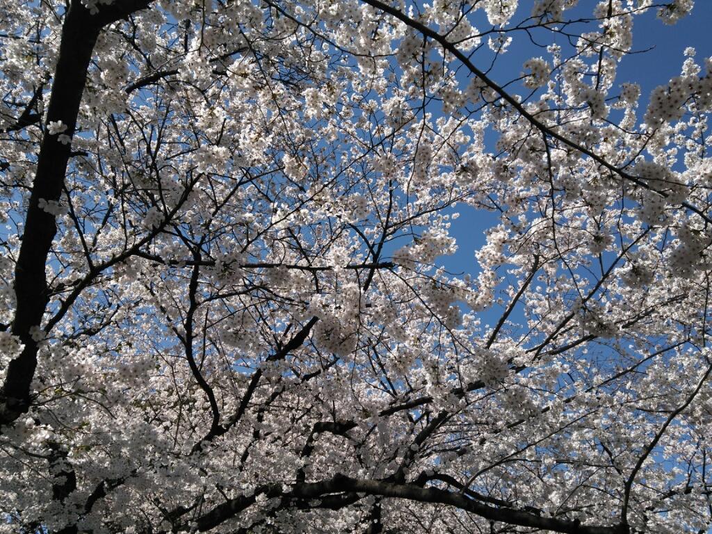 春が来た春が来た何処に来た