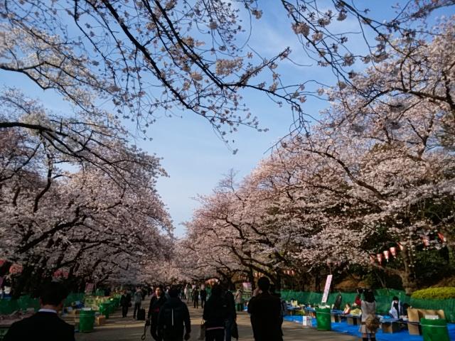 上野公園と不忍池の桜