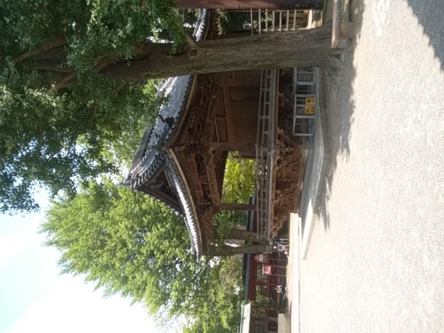 真夏の根津神社